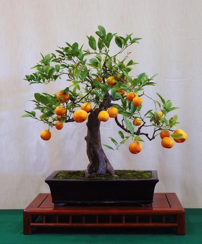 10 chậu bonsai cây ăn trái mini siêu đẹp dùng trang trí nhà dịp Tết - Ảnh 2.