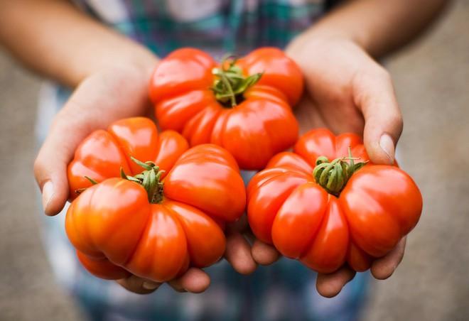 Những sự thật có thể gây sốc về quả cà chua ai cũng từng ăn - Ảnh 11.