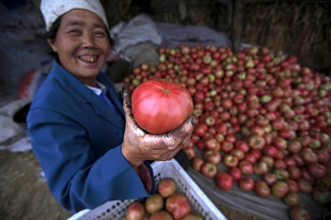 Những sự thật có thể gây sốc về quả cà chua ai cũng từng ăn - Ảnh 2.