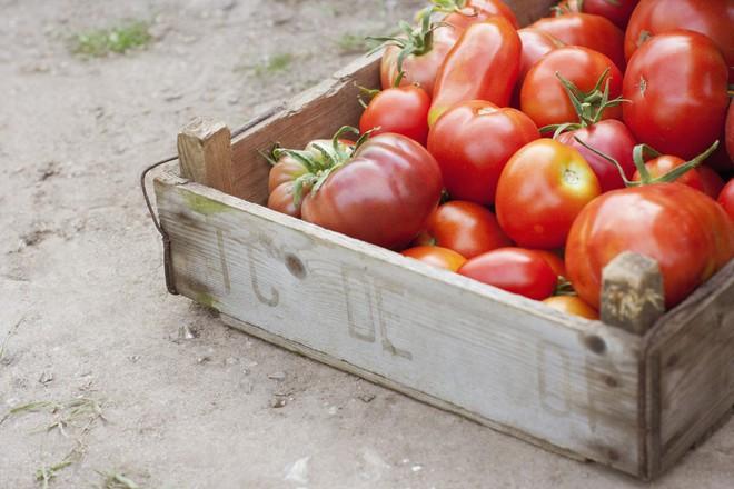 Những sự thật có thể gây sốc về quả cà chua ai cũng từng ăn - Ảnh 3.