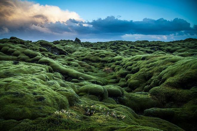 Có một cánh đồng dung nham xanh ngát xanh như ở hành tinh khác - Ảnh 2.