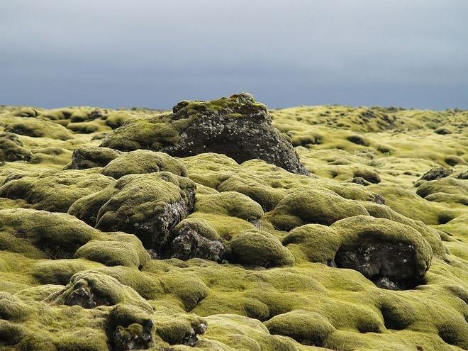 Có một cánh đồng dung nham xanh ngát xanh như ở hành tinh khác - Ảnh 3.
