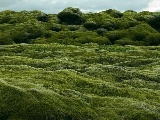 Có một cánh đồng dung nham xanh ngát xanh như ở hành tinh khác - Ảnh 8.
