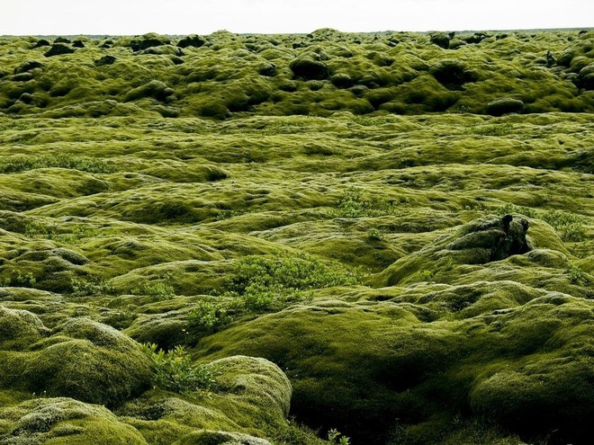 Có một cánh đồng dung nham xanh ngát xanh như ở hành tinh khác - Ảnh 7.