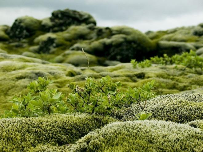 Có một cánh đồng dung nham xanh ngát xanh như ở hành tinh khác - Ảnh 6.