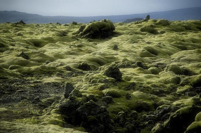 Có một cánh đồng dung nham xanh ngát xanh như ở hành tinh khác - Ảnh 5.