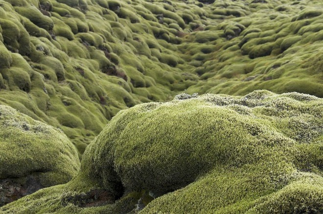 Có một cánh đồng dung nham xanh ngát xanh như ở hành tinh khác - Ảnh 4.