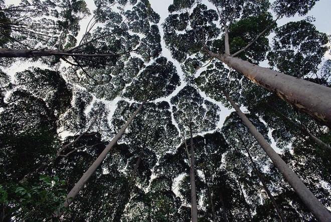 Không phải ảnh photoshop, đây là hiện tượng cực lạ ở một số loài cây - Ảnh 17.