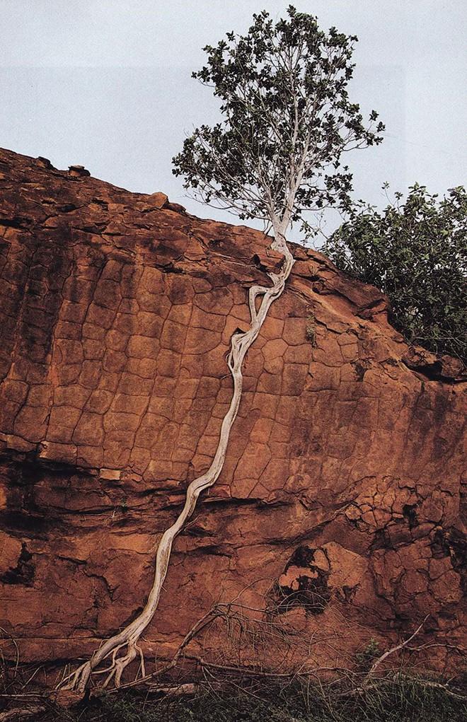 Đây chính là minh chứng hùng hồn về sức sống mãnh liệt của cây - Ảnh 11.