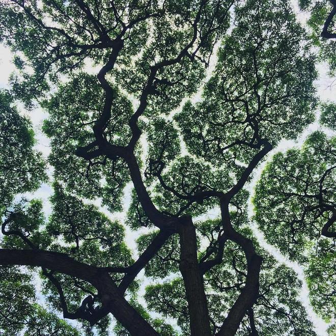 Không phải ảnh photoshop, đây là hiện tượng cực lạ ở một số loài cây - Ảnh 15.