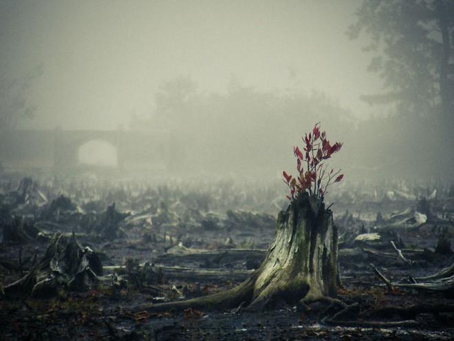 Đây chính là minh chứng hùng hồn về sức sống mãnh liệt của cây - Ảnh 13.