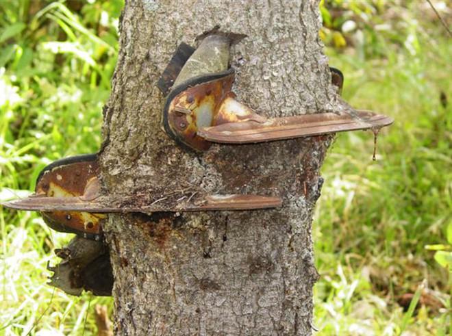 Đây chính là minh chứng hùng hồn về sức sống mãnh liệt của cây - Ảnh 14.