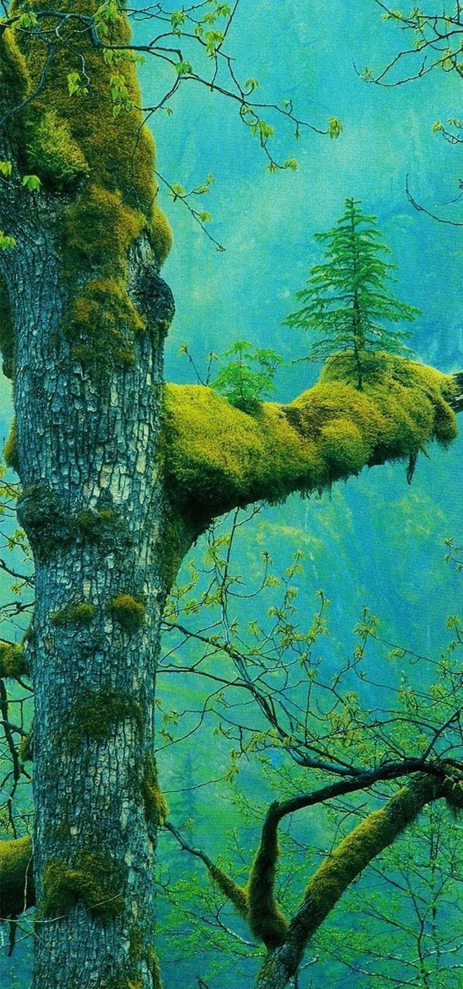 Đây chính là minh chứng hùng hồn về sức sống mãnh liệt của cây - Ảnh 16.
