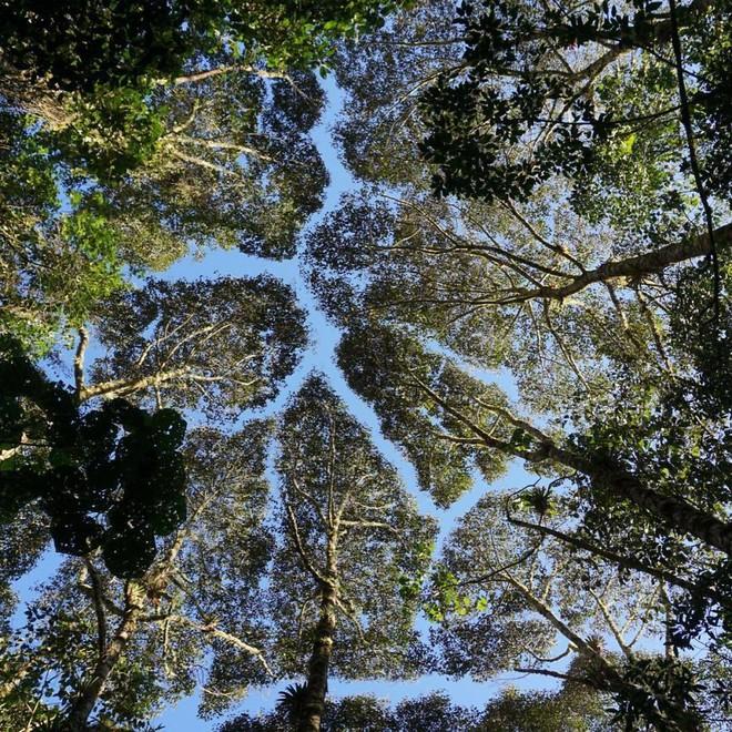 Không phải ảnh photoshop, đây là hiện tượng cực lạ ở một số loài cây - Ảnh 10.