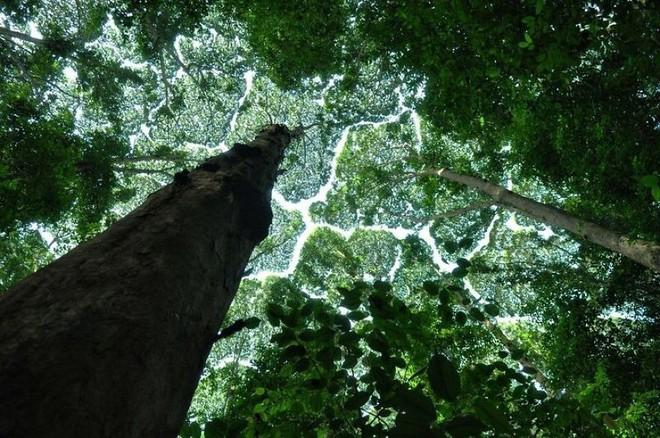 Không phải ảnh photoshop, đây là hiện tượng cực lạ ở một số loài cây - Ảnh 4.
