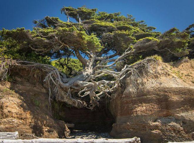 Đây chính là minh chứng hùng hồn về sức sống mãnh liệt của cây - Ảnh 5.