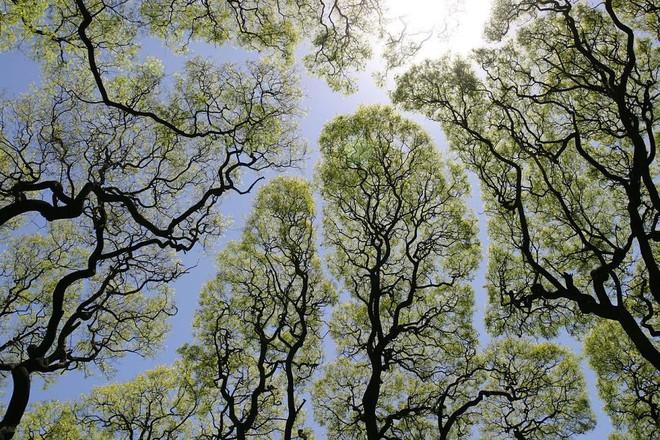 Không phải ảnh photoshop, đây là hiện tượng cực lạ ở một số loài cây - Ảnh 3.