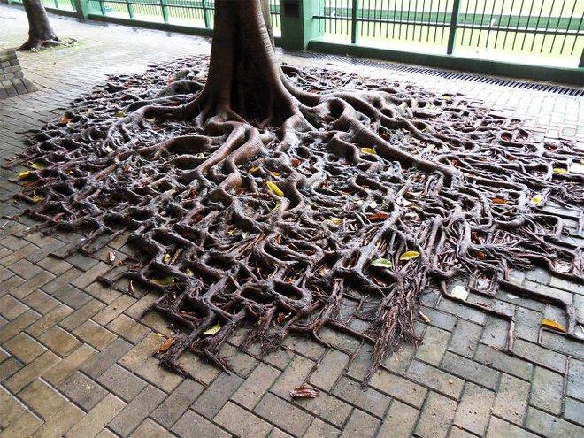 Đây chính là minh chứng hùng hồn về sức sống mãnh liệt của cây - Ảnh 6.