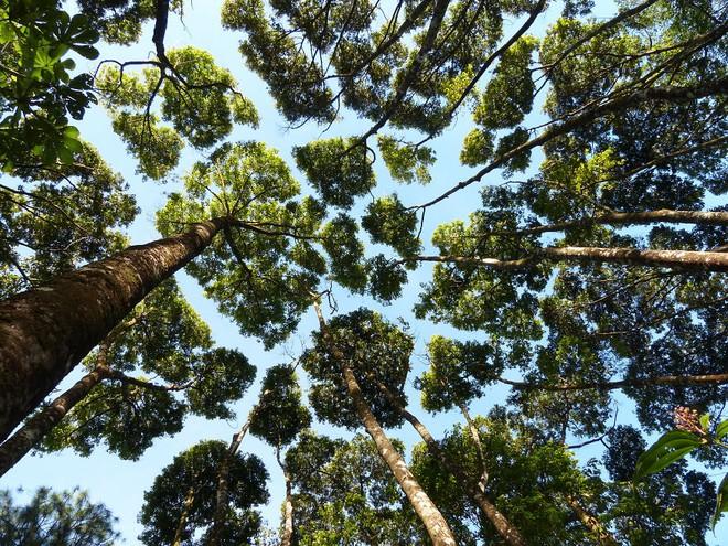 Không phải ảnh photoshop, đây là hiện tượng cực lạ ở một số loài cây - Ảnh 9.