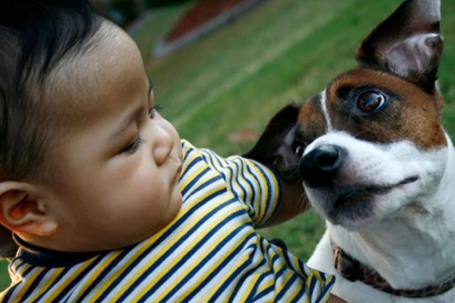 Cảnh báo: Bé trai tử vong nghi do mắc bệnh dại vì chơi với chó mèo trong nhà - Ảnh 1.
