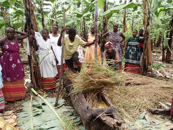 Thấy người dân đổ đống chuối vào thân cây gỗ rồi giẫm nát, ai cũng ghê nhưng không ngờ đây là thức uống vạn người mê - Ảnh 6.
