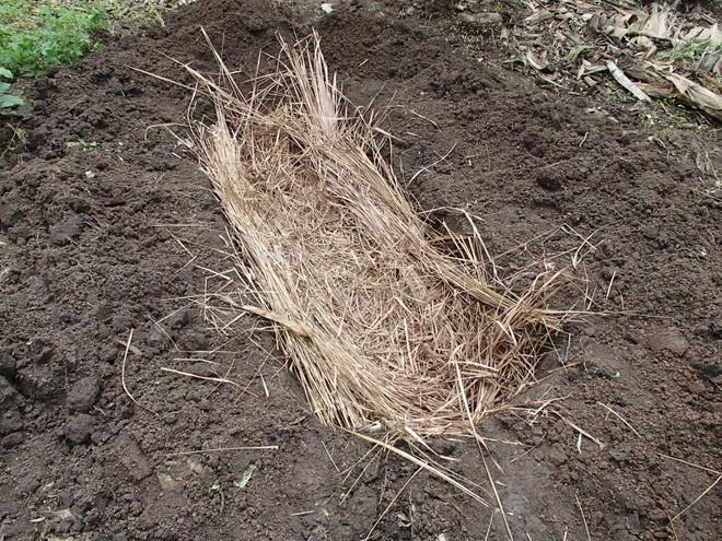 Thấy người dân đổ đống chuối vào thân cây gỗ rồi giẫm nát, ai cũng ghê nhưng không ngờ đây là thức uống vạn người mê - Ảnh 9.