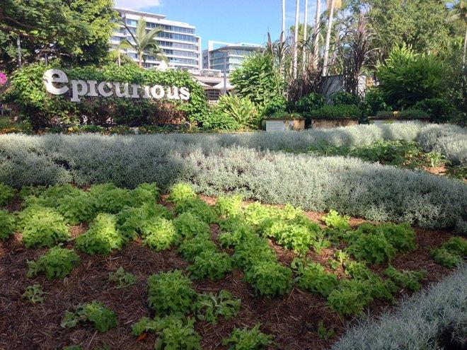 Có một công viên tràn ngập rau xanh và rau ở đây được phát hoàn toàn miễn phí - Ảnh 1.