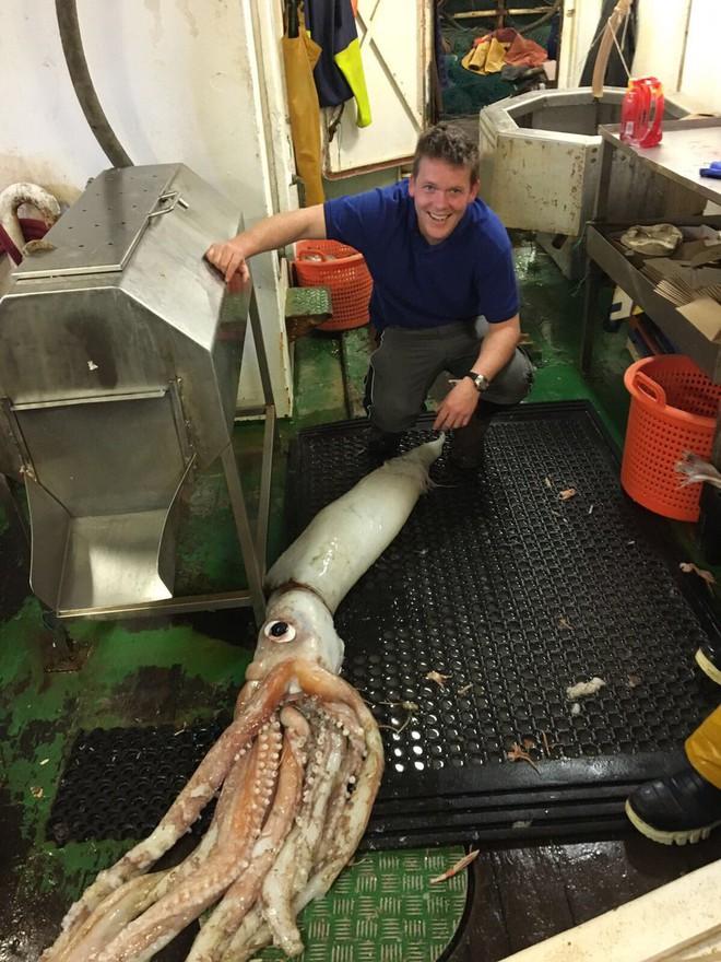 Mực khổng lồ dài hơn 5m liên tục sa lưới ngư dân - Ảnh 1.