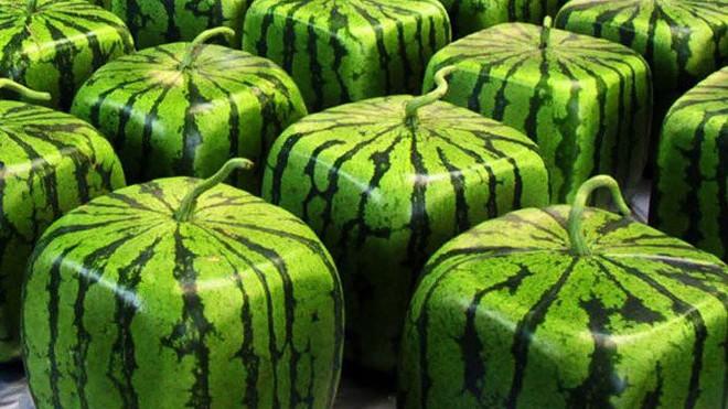 Hóa ra những trái cây chúng ta ăn thường ngày lại ẩn chứa nhiều điều thú vị - Ảnh 4.