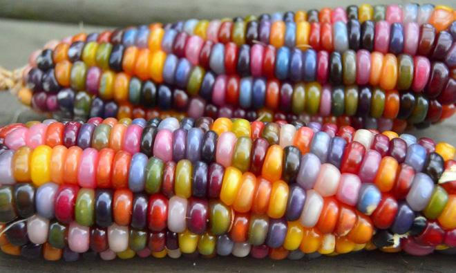 Những loại rau củ rực rỡ sắc màu khiến nhiều người không tin chúng có thật - Ảnh 2.