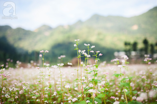 4 điểm du lịch Việt đẹp như mơ rất đáng để đi trong tháng 10 - Ảnh 1.