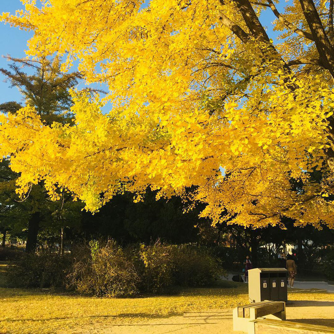 5 điểm đến mùa thu sẽ khiến bạn ngất ngây vì phong cảnh đẹp như trong mơ - Ảnh 3.
