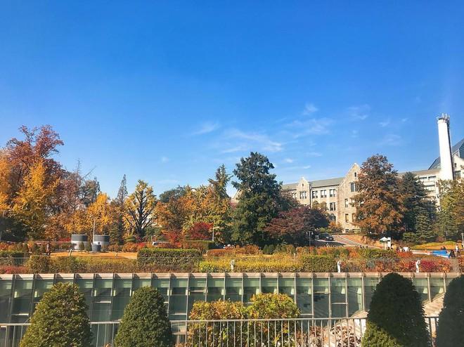 5 điểm đến mùa thu sẽ khiến bạn ngất ngây vì phong cảnh đẹp như trong mơ - Ảnh 4.