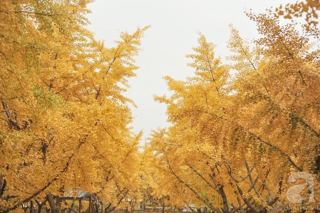 Mùa cưới đến rồi, bỏ túi ngay những địa chỉ chụp ảnh đẹp mê ly với lá vàng, lá đỏ này thôi - Ảnh 1.