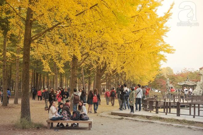 Mùa cưới đến rồi, bỏ túi ngay những địa chỉ chụp ảnh đẹp mê ly với lá vàng, lá đỏ này thôi - Ảnh 2.