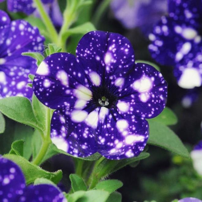 Những bông hoa kỳ lạ như chứa cả vũ trụ lung linh ngàn sao - ảnh 1