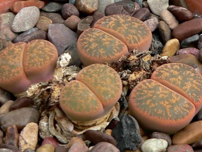 Ai cũng tưởng đây là những viên đá kỳ dị nhưng sờ tận tay mới biết sự thật bất ngờ - Ảnh 1.