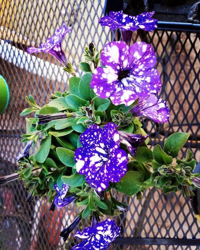 Những bông hoa kỳ lạ như chứa cả vũ trụ lung linh ngàn sao - ảnh 13