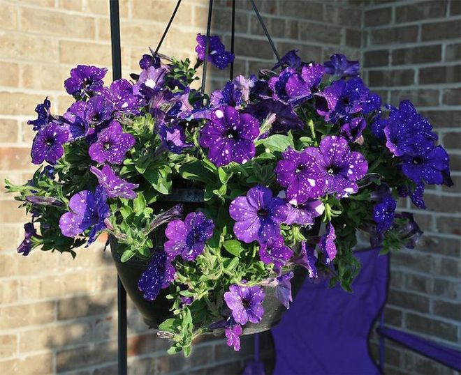 Những bông hoa kỳ lạ như chứa cả vũ trụ lung linh ngàn sao - ảnh 12