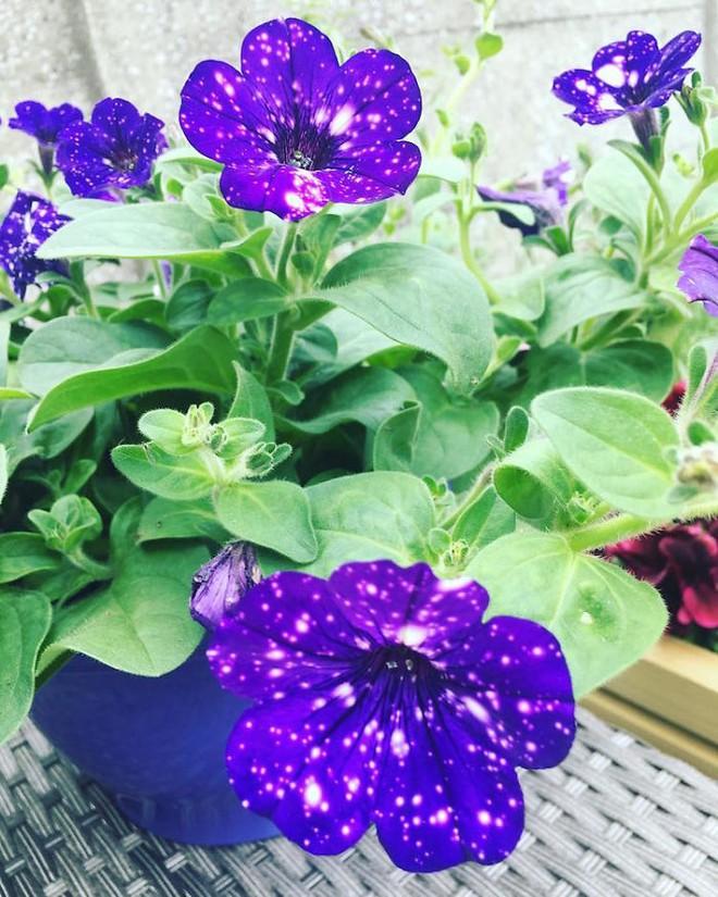 Những bông hoa kỳ lạ như chứa cả vũ trụ lung linh ngàn sao - ảnh 11