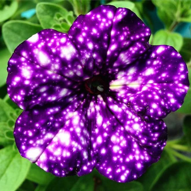 Những bông hoa kỳ lạ như chứa cả vũ trụ lung linh ngàn sao - ảnh 4