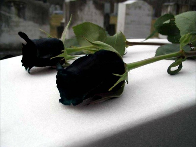 Xôn xao loài hoa hồng đen cực quý hiếm, chỉ trồng được ở duy nhất 1 ngôi làng - Ảnh 5.