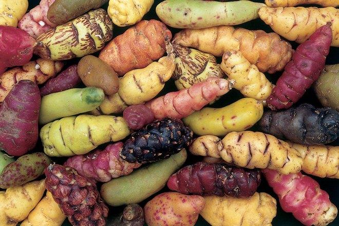 Những loại rau củ rực rỡ sắc màu khiến nhiều người không tin chúng có thật - Ảnh 18.