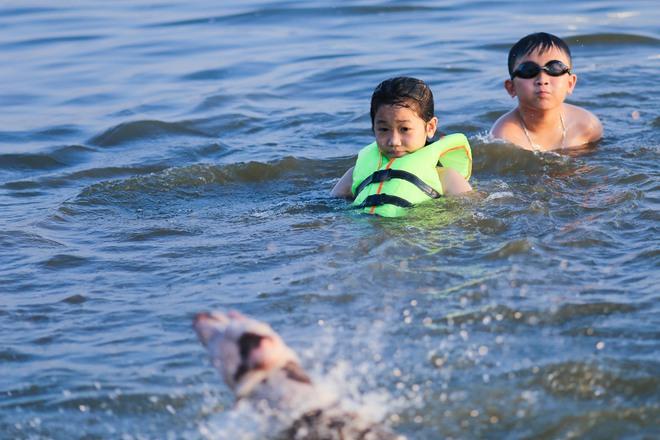Nắng nóng đỉnh điểm, chủ mặc kín như ninja lội nước, chó cưng vùng vẫy ở Hồ Tây - Ảnh 10.