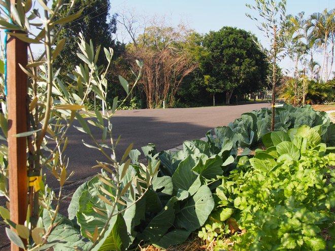 Có một khu phố xanh toàn rau quả sạch, ai đến thăm cũng không muốn về - Ảnh 9.