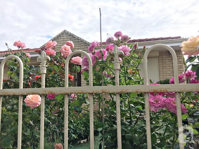 Mất 2 năm gây dựng, vợ chồng người Việt đã biến không gian sống của mình thành ngôi nhà hoa hồng đẹp ngẩn ngơ - Ảnh 3.