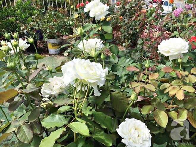 Mất 2 năm gây dựng, vợ chồng người Việt đã biến không gian sống của mình thành ngôi nhà hoa hồng đẹp ngẩn ngơ - Ảnh 10.