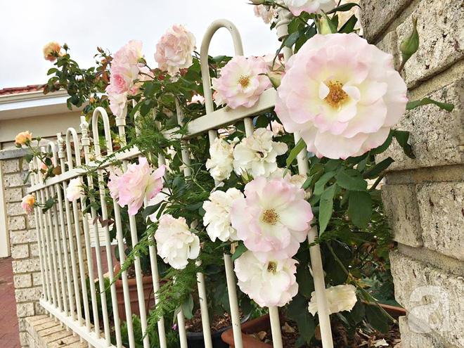 Mất 2 năm gây dựng, vợ chồng người Việt đã biến không gian sống của mình thành ngôi nhà hoa hồng đẹp ngẩn ngơ - Ảnh 11.