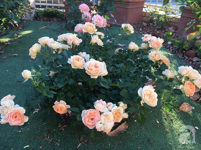 Mất 2 năm gây dựng, vợ chồng người Việt đã biến không gian sống của mình thành ngôi nhà hoa hồng đẹp ngẩn ngơ - Ảnh 12.