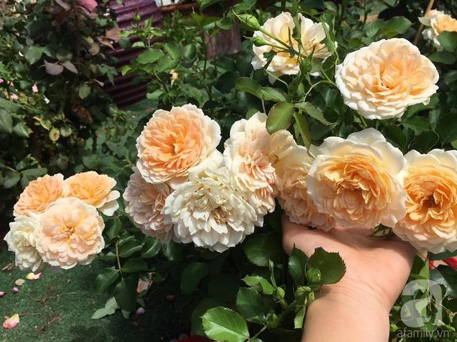 Mất 2 năm gây dựng, vợ chồng người Việt đã biến không gian sống của mình thành ngôi nhà hoa hồng đẹp ngẩn ngơ - Ảnh 14.